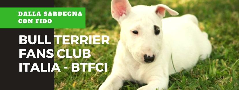 Il bull terrier Fans Club Italia ( BTFCI)