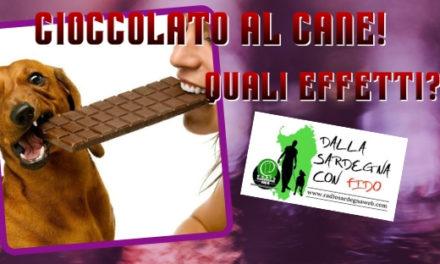 Curiosità: che effetto ha il cioccolato sul cane? E poi….cosa è uno standard di razza?