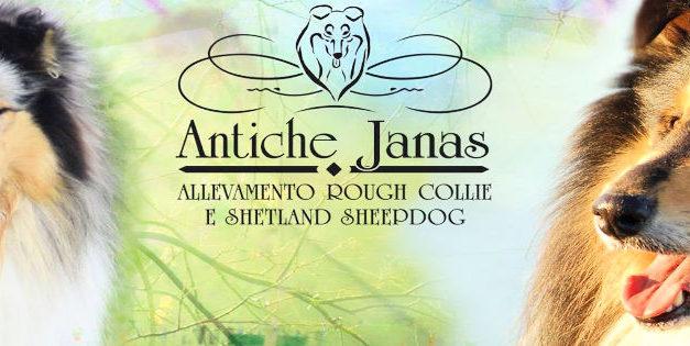 Elsa Soddu ed i suoi cani di razza Rough Collie