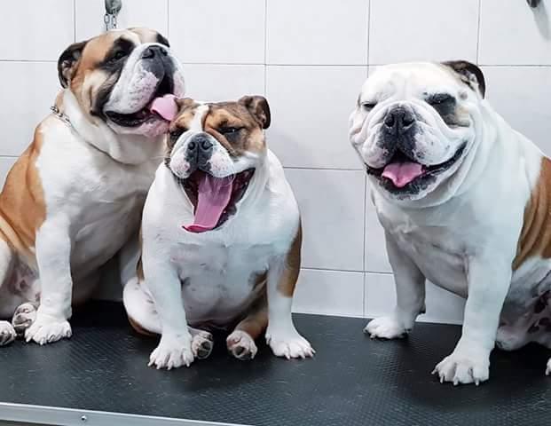 Fare il Bagno al proprio cane: con quale frequenza?