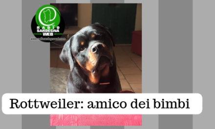 Il Rottweiler: l'amico dei bambini