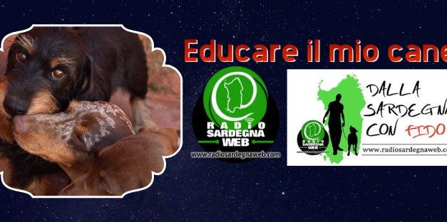 Educare il mio cane, addestrarlo? Utile o inutile?