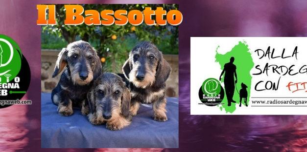 Il Bassotto: il piccolo grande cane