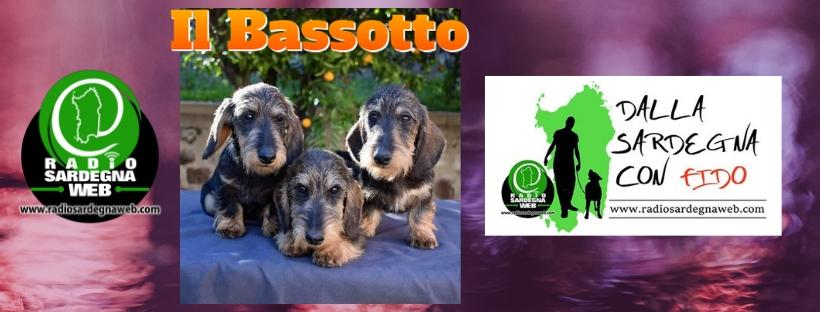Il Bassotto Il Piccolo Grande Cane Radio Sardegna Web