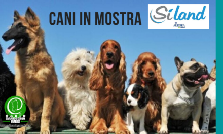 Cani in mostra