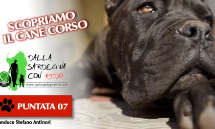 SCOPRIAMO IL CANE CORSO ITALIANO–🐶 DALLA SARDEGNA CON FIDO [ 07 ]